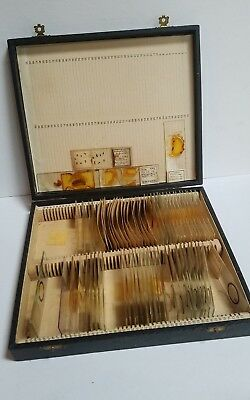 Ca. 1930s Box Of 65+ Biological Microscope Slides Insects Salamanders Antique