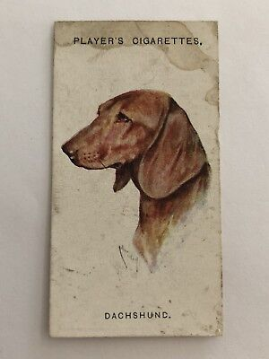 John Player & Sons Dogs Cigarette Card #9 Dachshund