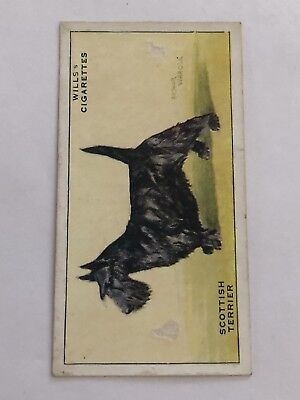 Wills DOGS Cigarette Card #46 Scottish Terrier