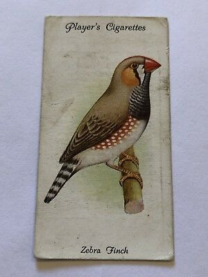 Player's Cigarette Card Aviary And Cage Birds #34 Zebra Finch