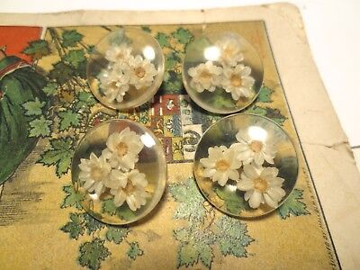 """4 Really Cute Vintage Real Embedded Acrylic Flower Buttons, 1"""""""