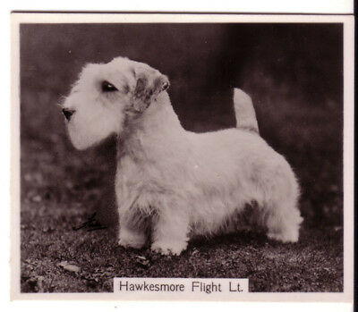 DOG Sealyham Terrier (Named), Photo Trading Card, 1938