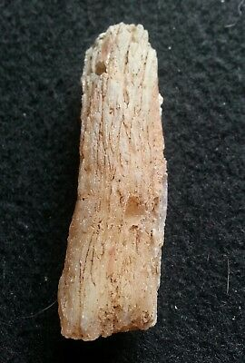 Limb Cast - Fossilized Wood Crystal Replacement