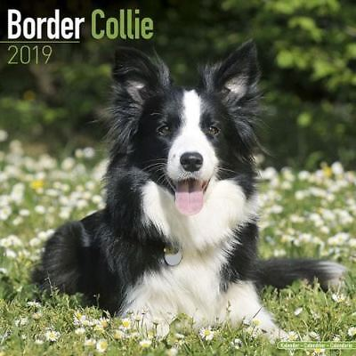 Border Collie Official 2019 Wall Calendar New & Sealed