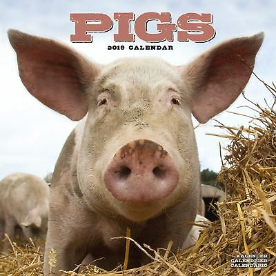 Pigs Official 2019 Wall Calendar New & Sealed
