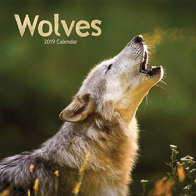 Wolves Official 2019 Wall Calendar New & Sealed