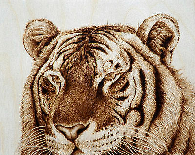 "Original Animal Drawing-Pyrography/woodburning ""to Face A Tiger"" Big Cat Art"