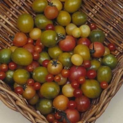 Tomato Garden Seeds - Rainbow Cherry - Organic, Heirloom, Vegetable Gardening