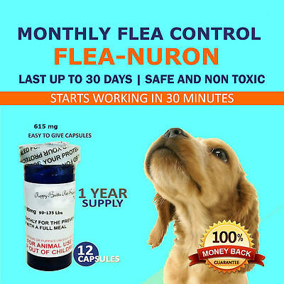 1 Year Supply MONTHLY Flea Control For Dogs 90-135 Lbs. 615 Mg PB 12 Capsules