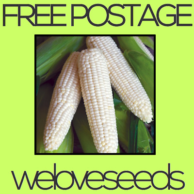 LOCAL AUSSIE STOCK - Rare White Corn, Vegetable Seeds ~10x FREE SHIPPING