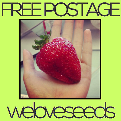 LOCAL AUSSIE STOCK - Giant Strawberry, Fruit Tree Plant Seeds ~10x FREE SHIPPING