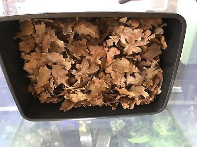 Leaf Litter Oak Dried Bio Active Reptile/Amphibians Ready To Use! 🍂🦎🐍🐞🐸🐌
