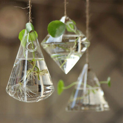 08A5 Wall Glass Terrarium Hydroponic Plant Clear Container Hanging Vase Home Dec