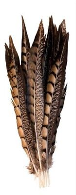 DIY Craft Pheasant Tail Feathers 10-14 inch Art Party Decor Natural Colour 5 Psc