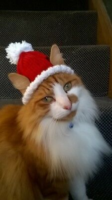Xmas Santa Hat for a Cat, Small Dog, Pet birthday novelty handmade gift