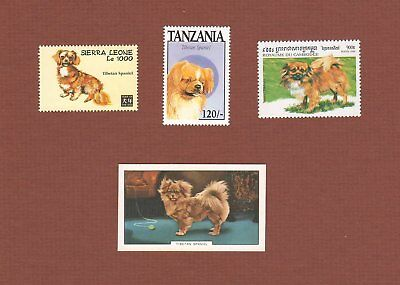 Tibetan Spaniel dog postage stamps and cards set of 4