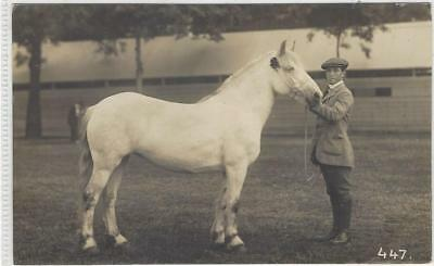 Horse Postcard - COURT- REAL PHOTO- Young Man and grey pony