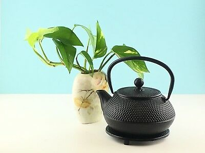 New Cast Iron Teapot 800mL with S/S Infuser Hobnail Black Kettle Tea Pot RRP $54
