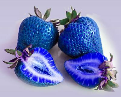 Blue Strawberry Strawberries Viable Seeds Rare Vegetables UK Stock