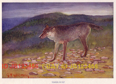 Wolf (Gray Timber), 90+ Year-old Antique Wildlife Print