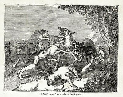 WOLF Hunt, Hunting Dogs, Antique Woodcut Print 1860s