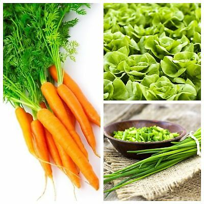 Vegetables for intercropping - Set no. 6 - seeds of 3 species