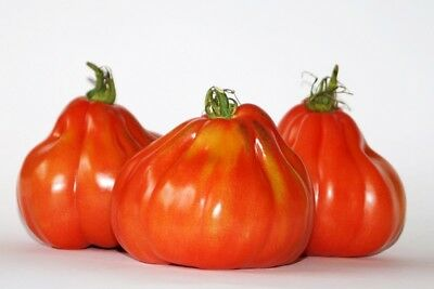 "Tomato ""Corazon F1"" - oxheart, tall variety for field and under cover cultivatio"