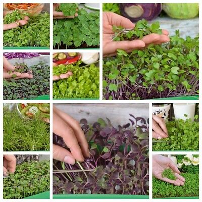 Microgreens - Fit pack - great addition to salads - 10-piece set + growing conta