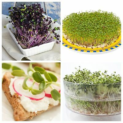 Sprouting seeds - Vitamin-D-rich sprouts - 3-piece set + sprouter with 3 trays