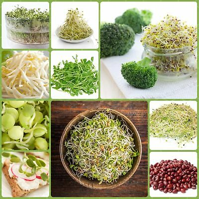 Sprouting seeds - Vitamin-B-rich sprouts - 9-piece set + sprouter with 3 trays