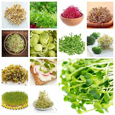 Sprouting seeds - XXL set - 18 pieces