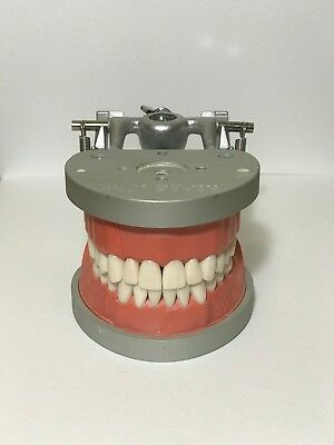 Dental Typodont, ModuPRO, Acadental Model MPR 210 Prosth Kit