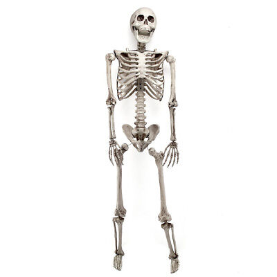 3FT Halloween Poseable Human Skeleton Party Decoration Prop Full Body Life Size