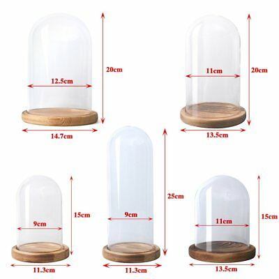 Small or Large Glass Display Cloche Bell Jar Dome with Wooden Base