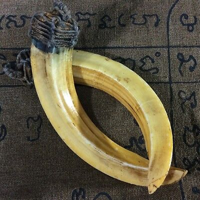 Power Antique Solid Teeth Amulet Real 2 Pig WILD BOAR Tooth Thai Amulet Pendant
