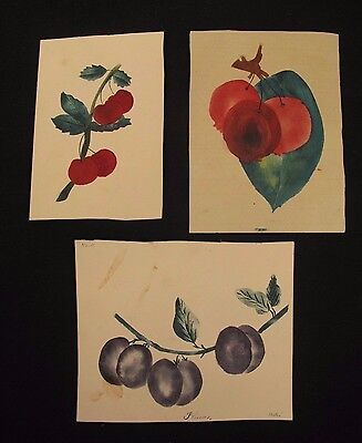 """Set of 3 19th Century Theorem Paintings Fruit on the Vine Signed 4.5"""" x 5.5"""""""