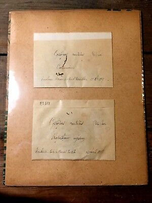 Antique Seed Pack Cystopus candidus Cardomine 1907 Rapistrum rugosum 1908 French