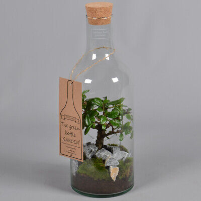 The green Bottle Garten - Glasflasche mit Kork und Bonsai