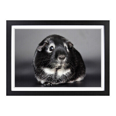 "Guinea Pig Art Print /""Lets be Best Friends Forever/"" GiftFrame Not Included"