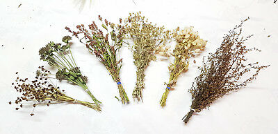 Set of decorative natural dried grass stems herbs rustic wedding wheat