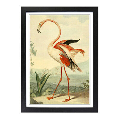 Framed Picture Print A2 Vintage Charles R Ryley Flamingo Animal Retro Wall Art