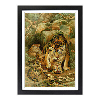 Framed Picture Print A2 Vintage Natural History Tigers Animal Retro Wall Art