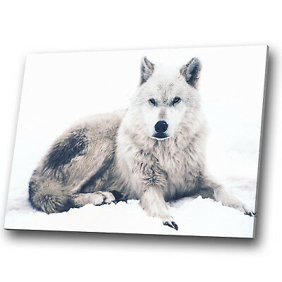 A843 Wolf Black White Forest Funky Animal Canvas Wall Art Large Picture Prints