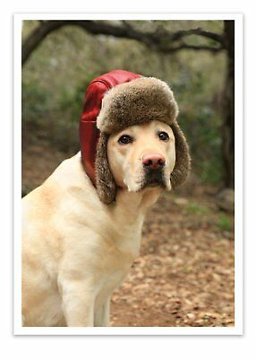 12 'Dog with Fur Cap' Christmas Cards with Envelopes Dog in Hat Greeting Card...