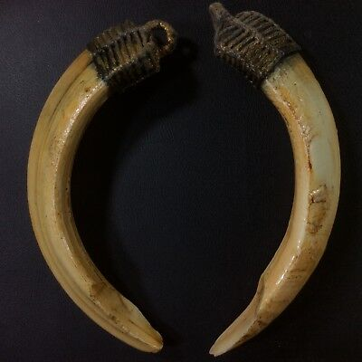 Real Solid 2 Spike Wild Boar Pig Hog Teeth Pendant Thai Amulet Canine Power