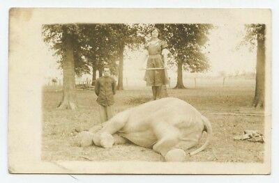 Circus performers ~ woman standing on downed elephant ~ 1912 RPPC postcard