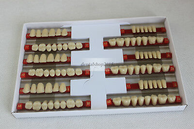 dental Acrylic Resin Teeth full set denture teeth color A3 503 upper lower shape
