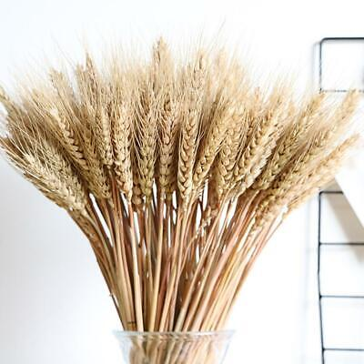 100Pcs Stems Dried Wheat/Rye For Flowers Arranging Ready To Use Natural Bouquet