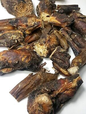 Premium Bully Pizzles Cut End Pieces Meaty Treat for Dogs 100% Natural &Healthy