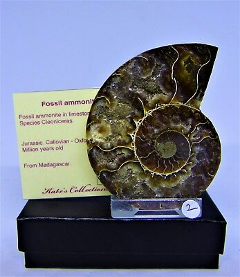 Gift Boxed Cleoniceras Ammonite  Fossil  Slice 7.5 cm 110 MYO +  display stand